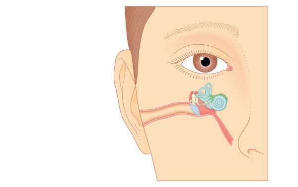 Anatomie de l'oreille et comment elle fonctionne